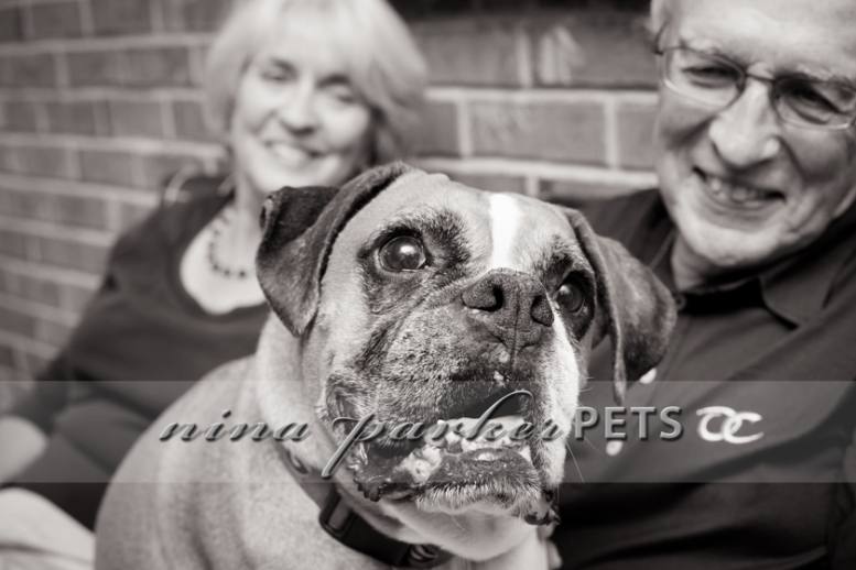 Atlanta-Pet-Dog-Photographer-Nina-Parker-PhotographyIMG_0325