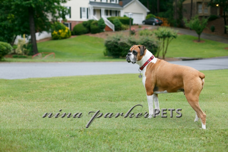 Atlanta-Pet-Dog-Photographer-Nina-Parker-PhotographyIMG_0343