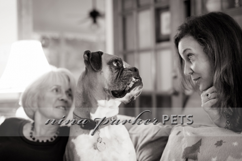 Atlanta-Pet-Dog-Photographer-Nina-Parker-PhotographyIMG_0424