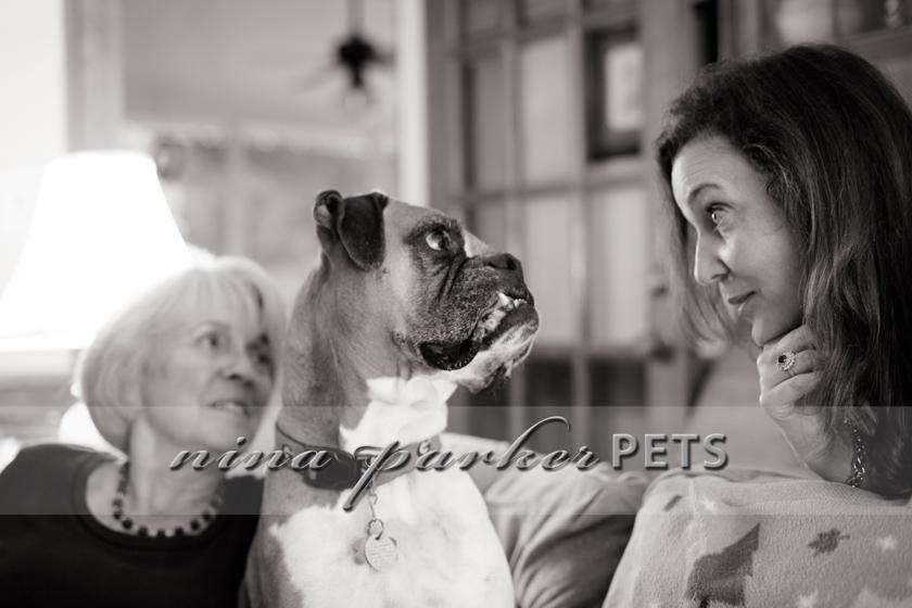 Atlanta-Pet-Dog-Photographer-Nina-Parker-PhotographyIMG_0424