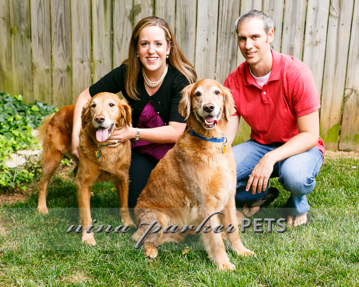 Golden_Retriever_Atlanta_NinaParker_PETS_IMG_0247