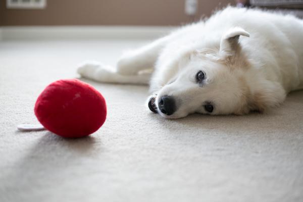 Smyrna-Dog-Photographer-Nina-Parker-Pets-PhotographyIMG_1551