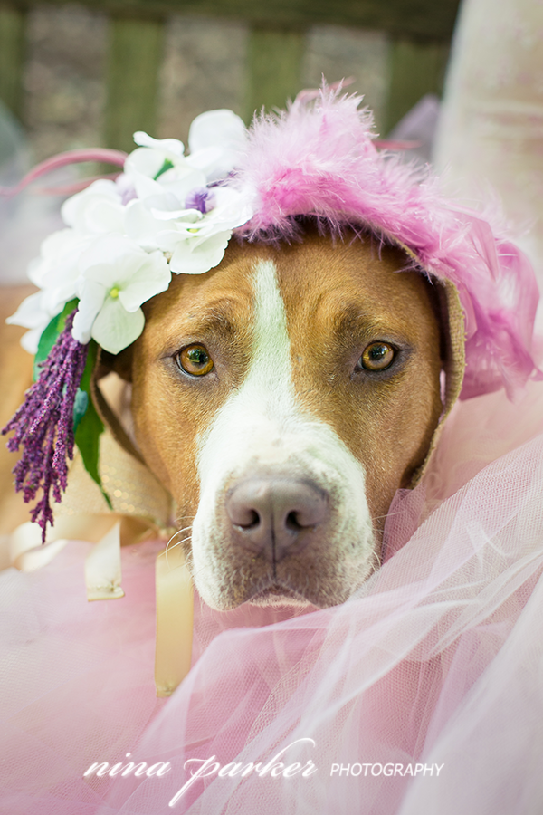 Glamour-Dog-Pitbull-Atlanta-NinaParkerPhotography-3061