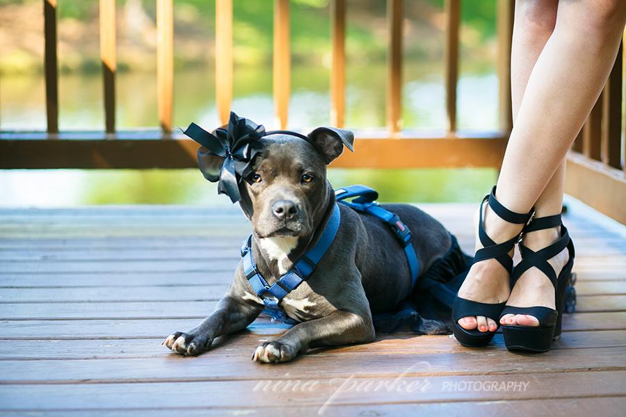 Pitbull-Glamour-DogPortrait-NinaParkerPets0057