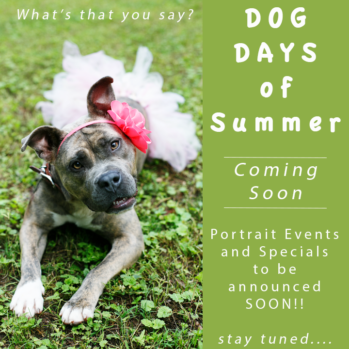 Dog Days of Summer_NinaParkerPhotography