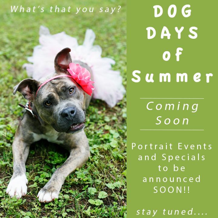 Dog Days of Summer_NinaParkerPhotography