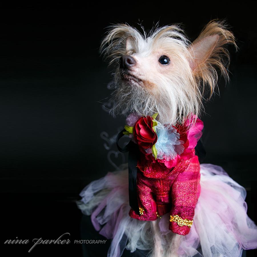 Atlanta_Dog_Photographer_ChineseCrested_NinaParkerPhotography-0363