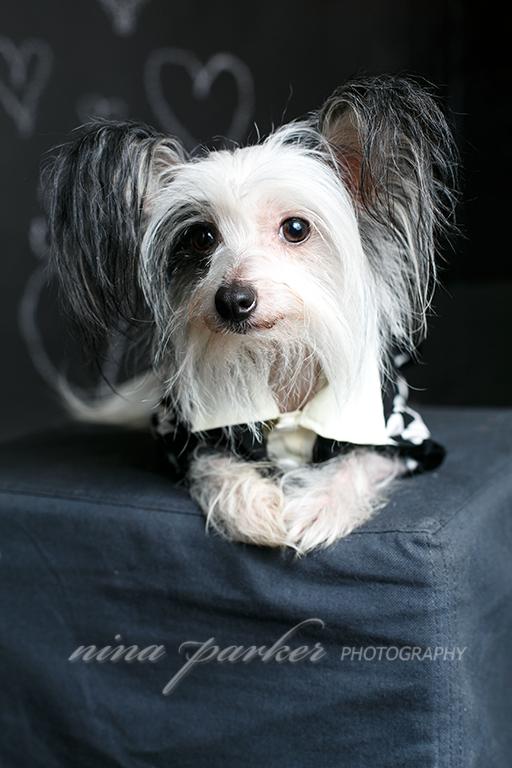 Atlanta_Dog_Photographer_ChineseCrested_NinaParkerPhotography-0396