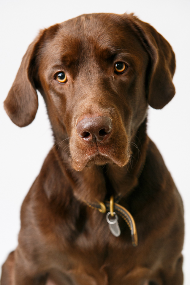 chocolatelab_portrait_ninaparkerphotography_6981