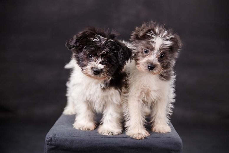 studioportrait_puppies_ninaparkerphotography_atlanta