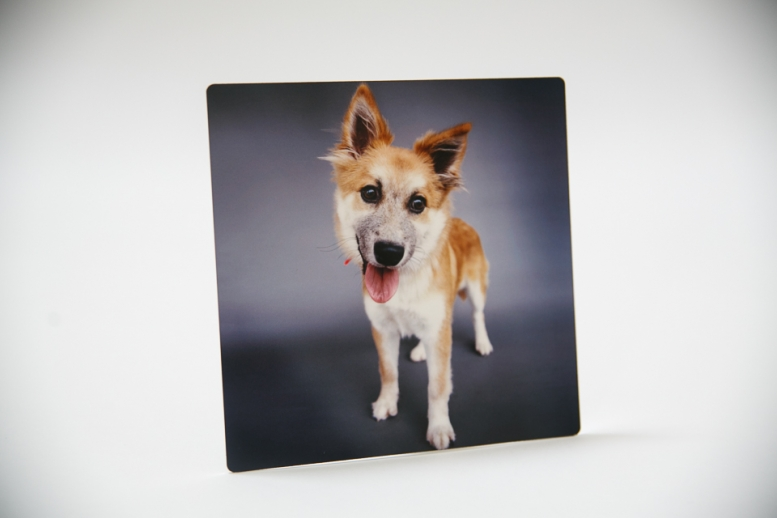 products_dogportraits_ninaparkerphotography_7055w