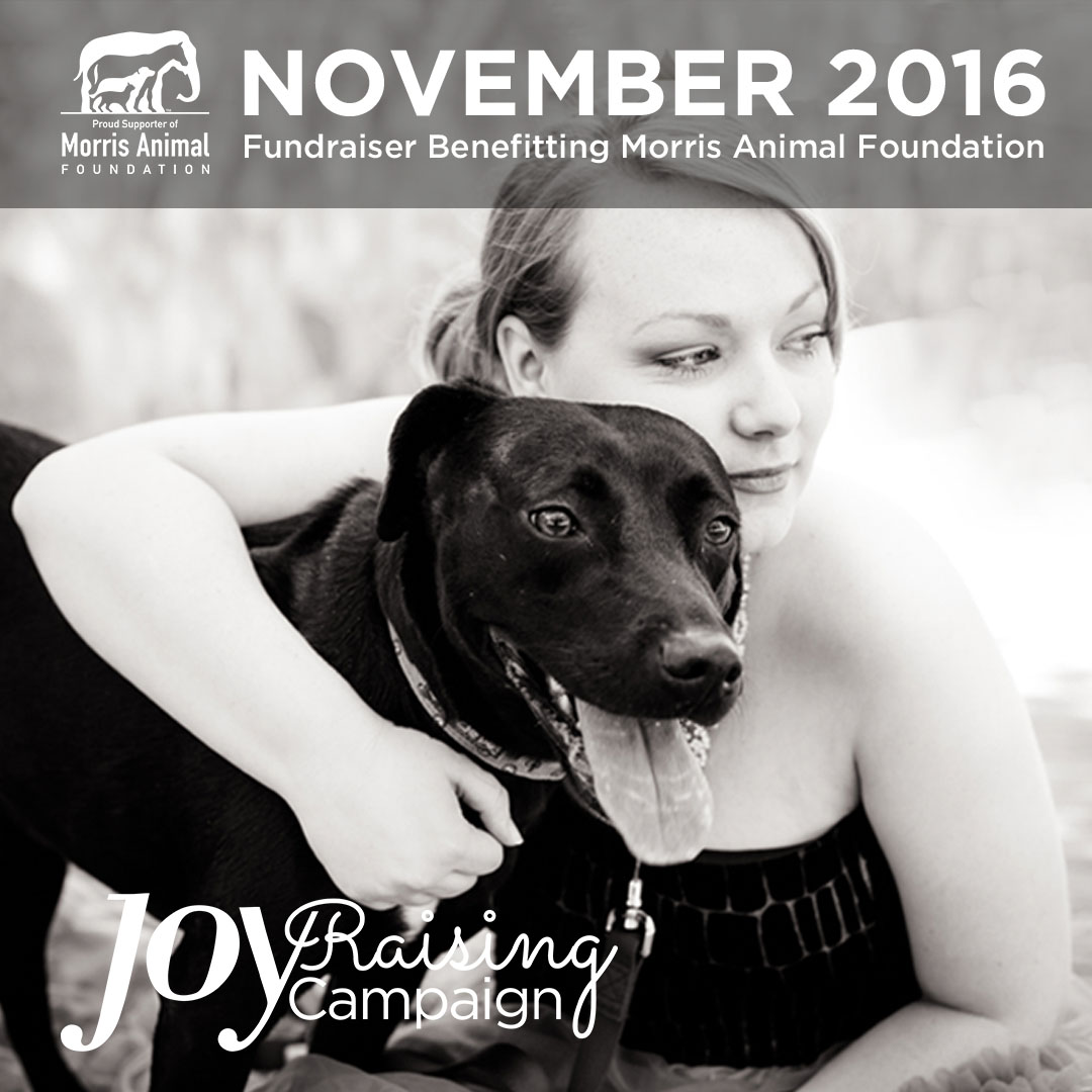 joy-raising-campaign2016