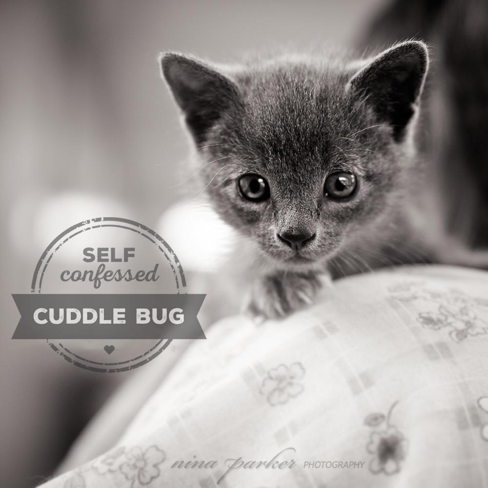 Blog Nina Parker Pets