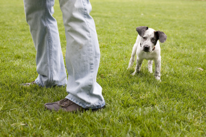 Puppy_portrait_atlanta_grass_outdoor_NinaParkerPets.png